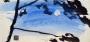 L'hiver bleu dans les pins 2